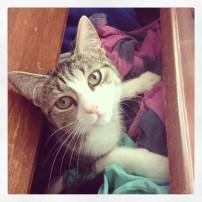 Abby, the missing kitten.