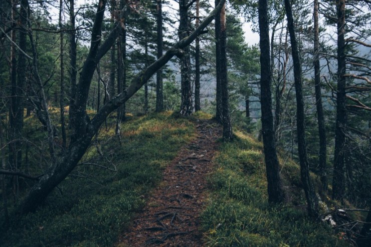 adventure-forest-nature-4029-824×550