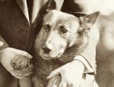herbert-hoover-king-tut-dog