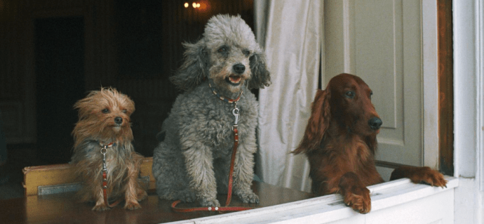 Richard Nixon's dogs Pasha (left), Vicky (middle), and King Timahoe peer out of a White House window, Dec. 1, 1970.