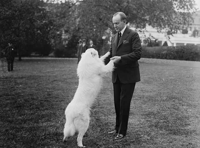 President Coolidge plays with Rob Roy, Oct. 31, 1924.