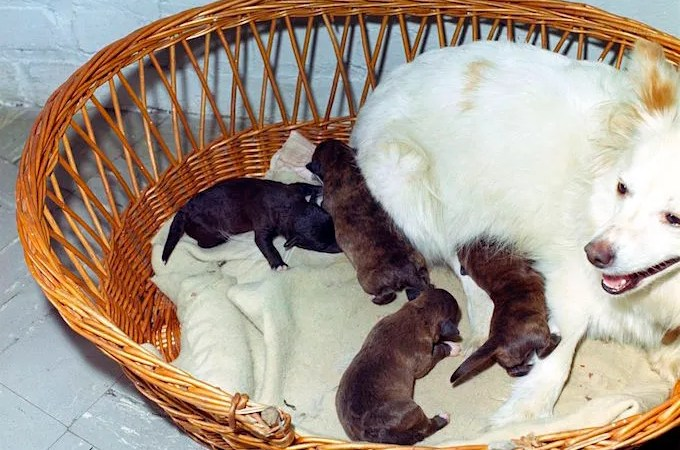 JFK's Puppies: Butterfly, White Tips, Blackie, and Streaker