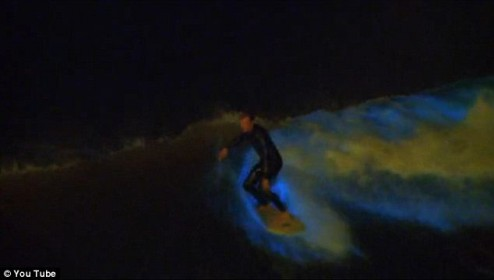 san diego red tide ocean bioluminescent surfer
