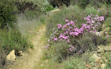 Santa Barbara Trail Running Guide