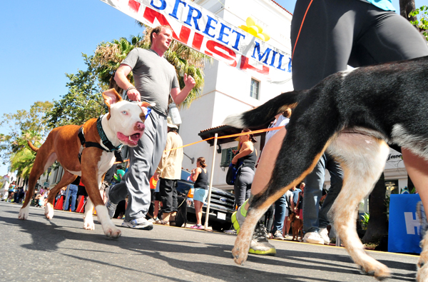 The Dog Mile, the unofficial world championship in the event, finished off the day's racing on State Street.
