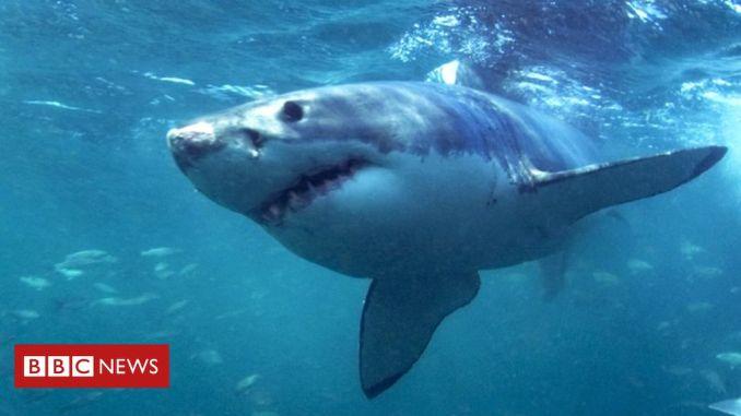 Australia shark attack: Surfer survives mauling