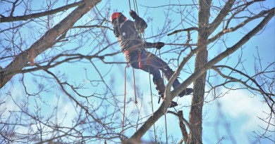 Tree Cutter Suspended High Up  - Scottslm / Pixabay