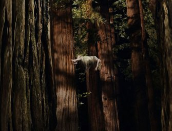 Trailer: Woodshock