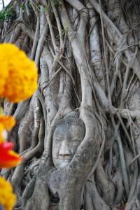 Cabeça de Buda em Ayutthaya