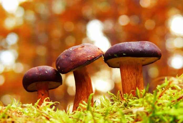 Plantas e fungos no mundo