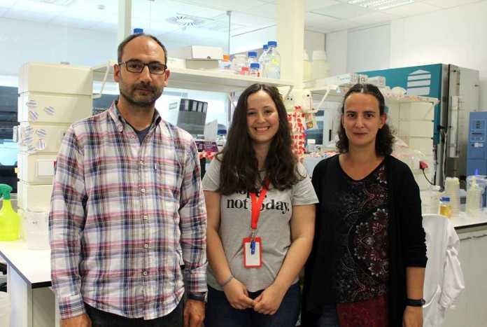 bacteria salmonella cientistas