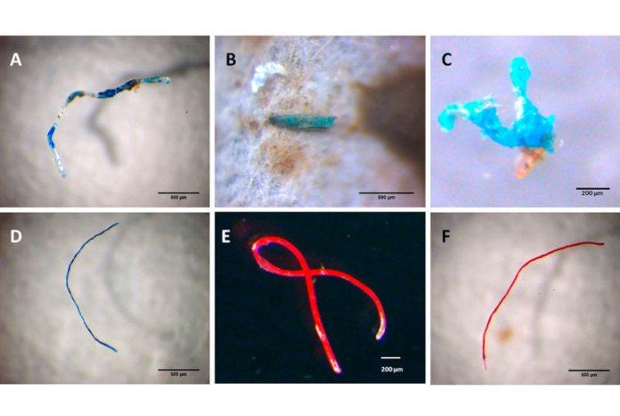 microplásticos na cadeia alimentar