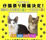 1563492 thum - 仔猫祭り
