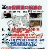 1595926 thum 1 - 保護猫の譲渡会
