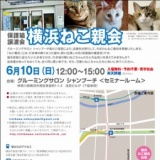 1596723 thum - 横浜ねこ親会