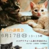 1598046 thum 1 - ネコの譲渡会