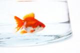 1599244 thum 1 - 30代40代中心 【新橋】熱帯魚・金魚好き飲み会