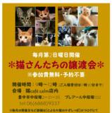 1602722 thum - 猫さんたちの譲渡会