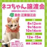 1604642 thum 1 - ネコちゃん譲渡会