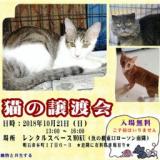1605347 thum 1 - 猫の譲渡会in明石