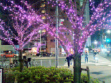 1605910 thum - 冬の一葉桜まつり イルミネーション