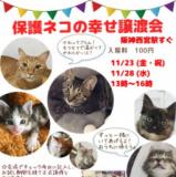 1607672 thum 1 - 保護ネコの幸せ譲渡会