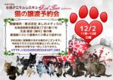 1607998 thum - 猫の譲渡予約会