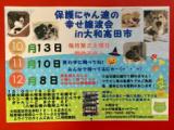 1608149 thum 1 - 保護にゃん達の幸せ譲渡会in大和高田市