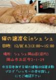 1608155 thum 1 - 子猫の譲渡会