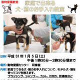1608383 thum - 家庭でできる犬・猫のお手入れ教室