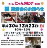 1609257 thum 1 - 猫譲渡会