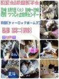 1614473 thum 1 - 保護猫の譲渡会&映画試写会