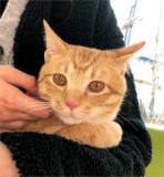 1615960 thum - 4月7日(日) 猫の譲渡会 名古屋市港区 社会福祉法人中部盲導犬協会 みなと猫の会 主催