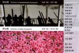 1616078 thum 1 - 『時は春 brilliant color exhibition 』写真展