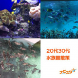 1634127 thum 1 - 20代30代 葛西臨海水族館出会い巡り散策