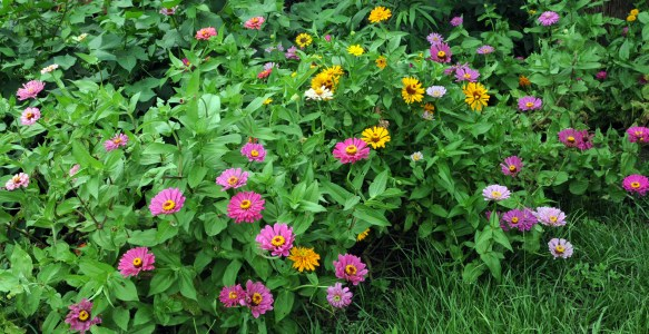 Our CSA Program Offers Weekly Boxes Of Herbs, Veggies, And Flowers