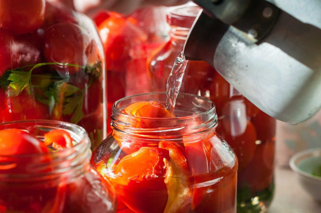 Canning process of tomato in mason jar. Pressure canning tomatoes