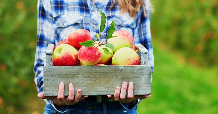 woman-hands-holding-crate-fresh-ripe