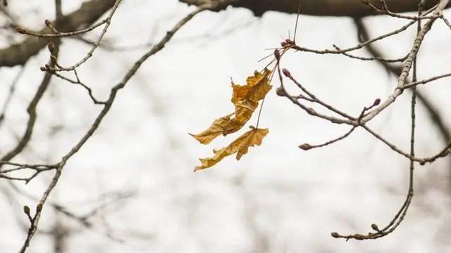 leaf-blow