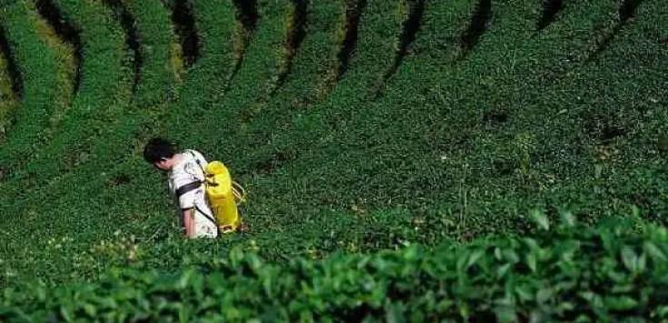 9+ Best Weed Killer Sprayers: Lawns, Handheld, Backpack