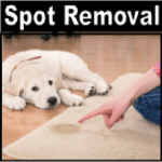Pet Odor and Spot Removal