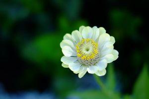 Flower_4_(1_of_1)-2.jpg