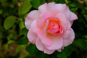 Flower_6_(1_of_1).jpg