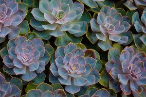 Flower_7_(1_of_1).jpg