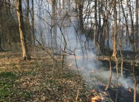 Požar v gozdu v bližini naselja Vidonci