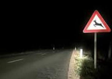 Gorenjski policisti v mesecu juniju obravnavali kar 28 trčenj z divjadjo