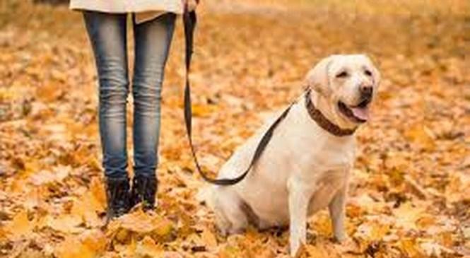 Grozno: Psa ubil kar z macolo