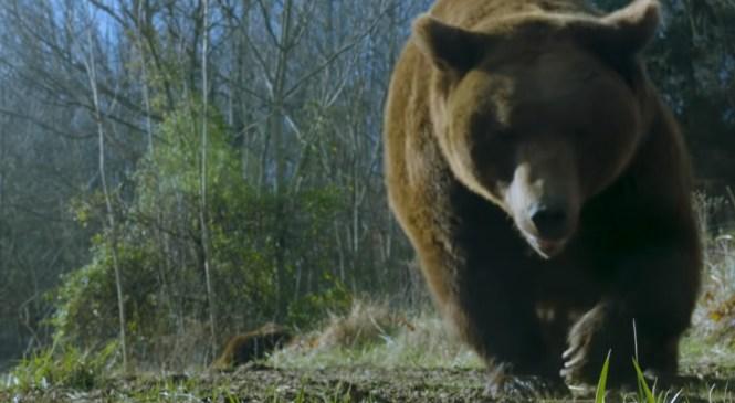 V Lipoglavu sinoči opazili medveda