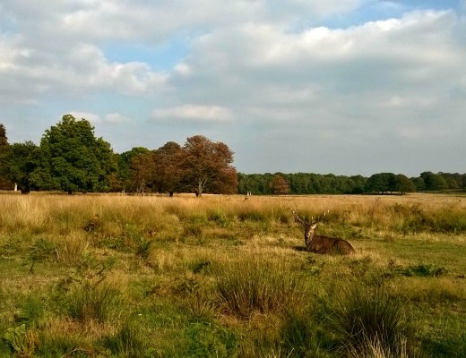 Deer of Richmond Park