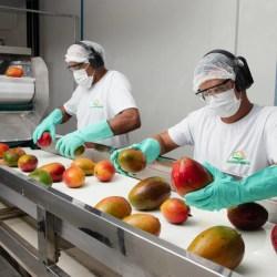 Governador Rui Costa inaugura de indústria de processamento de frutas nesta quinta feira (29) em Sobradinho